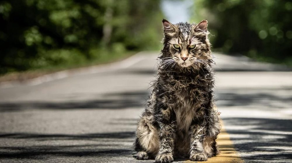 Pet Sematary remake Stephen King / Filmz.dk