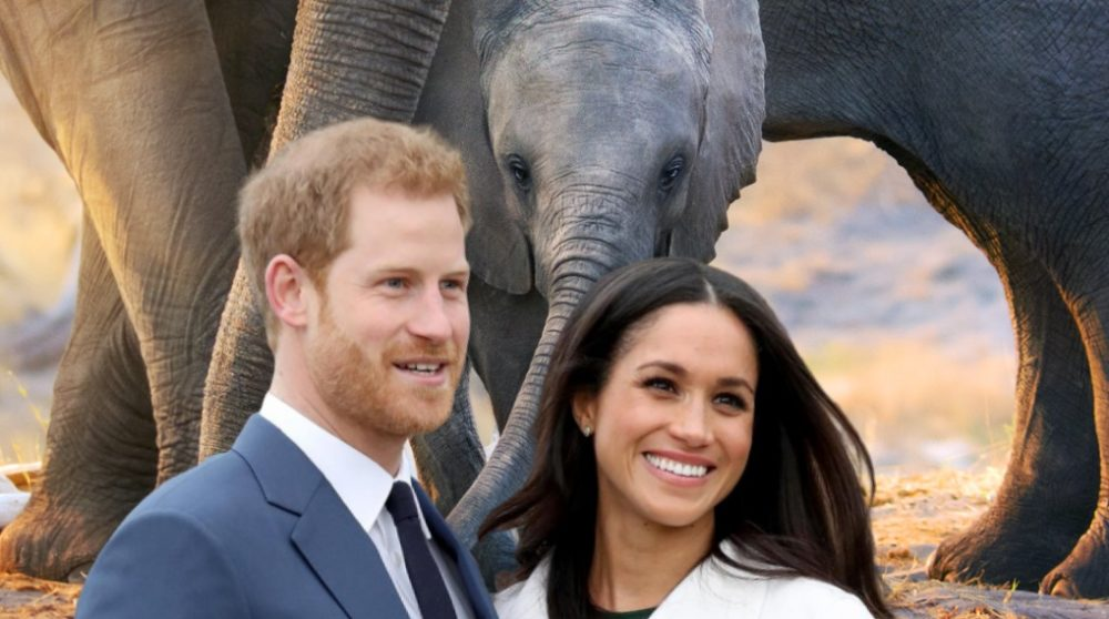 Elephant Disney Plus Meghan Markle / Filmz.dk